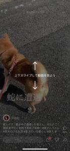タテ動画の画像
